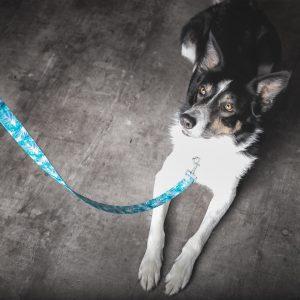 Kutya pórázak