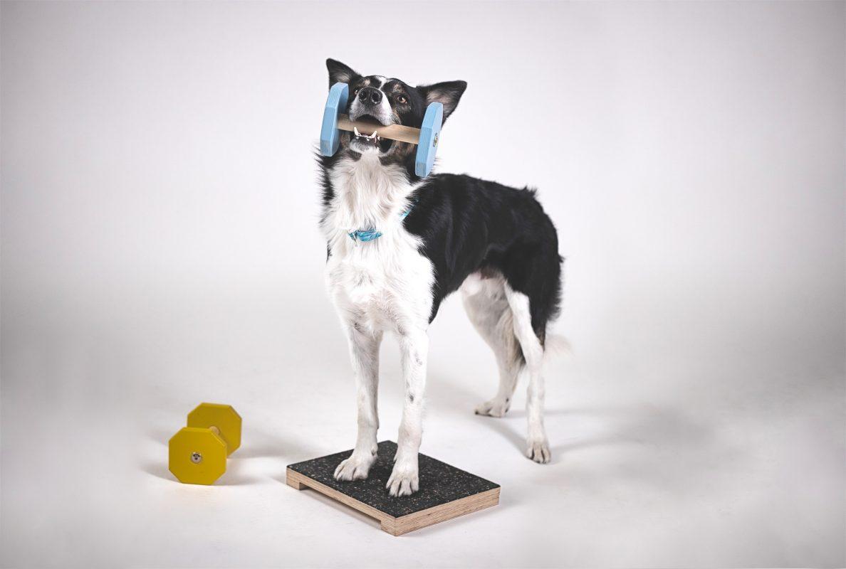 Obedience és dogdancing